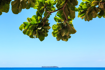 underneath: View from underneath a tree over the ocean on a tropical island Stock Photo