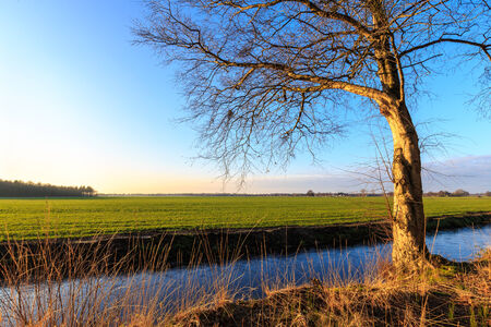 evening glow: A tree in evening glow in the countryside landscape