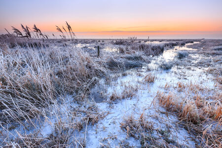 hoar: Hoar frost on reed in a winter morning landscape in Holland