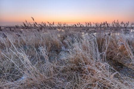 hoar frost: Hoar frost on reed in a winter morning landscape in Holland