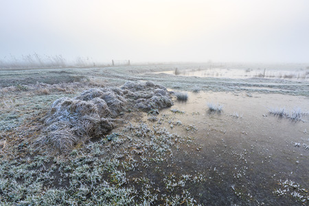 hoar frost: Farmland on a cold misty winter morning with hoar frost