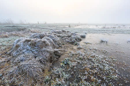 hoar: Farmland on a cold misty winter morning with hoar frost
