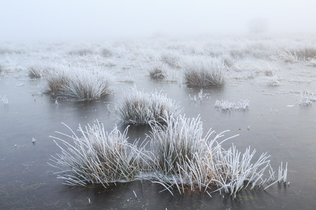 hoar: Close up of grass with hoar frost on a misty winter day