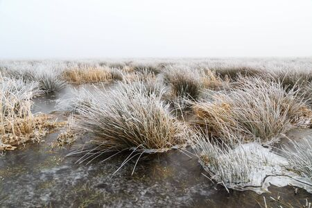 hoar frost: Cold Winter landscape of wetlands with mist and hoar frost in Holland