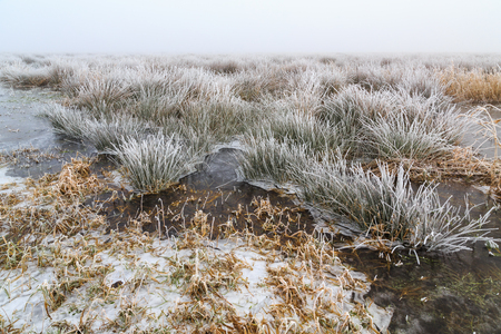 hoar: Cold Winter landscape of wetlands with mist and hoar frost in Holland