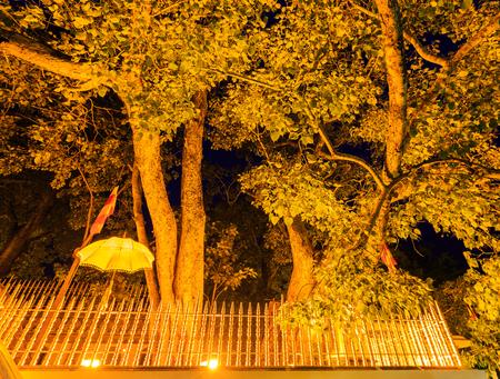 anuradhapura: Very old holy Bo tree in Anuradhapura