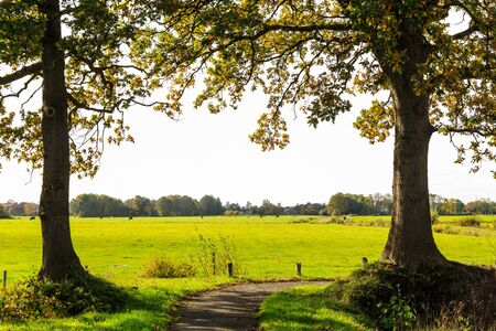 dutch typical: Typical dutch landscape of grassland with cows ona sunny day Stock Photo