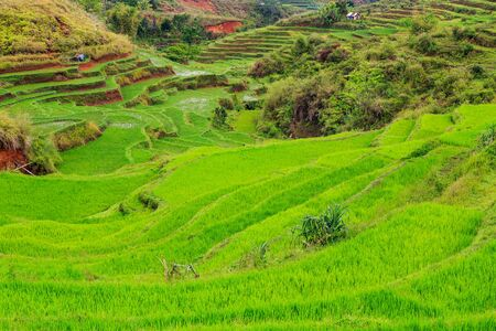 Beautiful green rice terraces on a cloudy day at Flores island, Indonesia