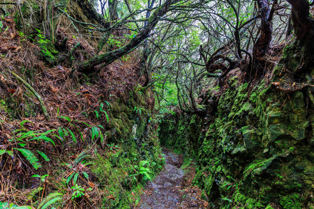 Walking trail along the levadas in the mountains of Madeira, Portugal on a rainy day
