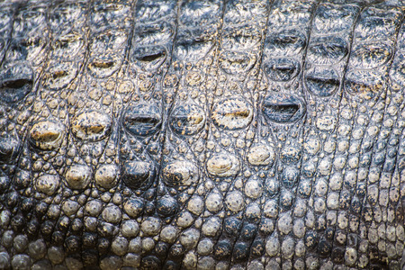 Crocodile skin texture photo