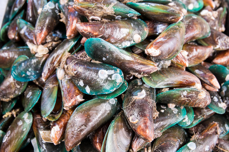 commercial fisheries: green mussel