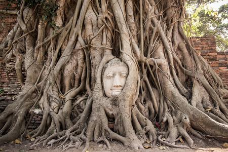 Jefe de la piedra arenisca de Buda en las raíces del árbol en Wat Mahathat, Ayutthaya, Tailandia Foto de archivo - 34920289