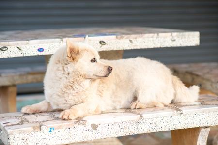 dog sitting on bench photo