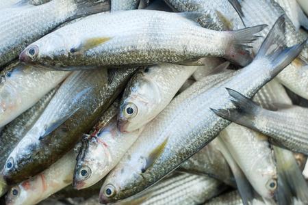 Verse vis op zeevruchtenmarkt