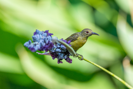 Beautiful Sunbird and flower Standard-Bild