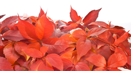 background beauty: Leaves background beauty nature colors