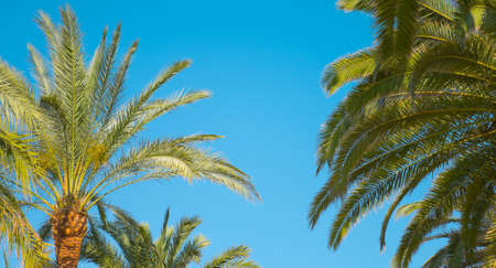 palmtrees: Palm trees nature background