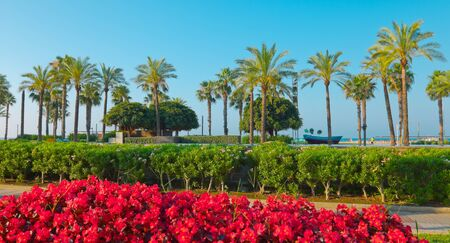 Beautiful palm trees, Salou, Spain Archivio Fotografico