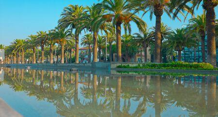 dorada: Palm trees and reflected in water palms. Costa Dorada, Salou town, Spain Stock Photo