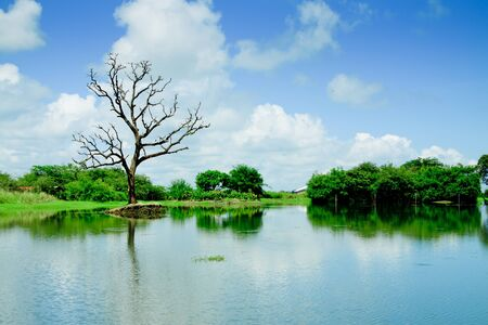 wetlands with reflection of tree and sky Stock Photo - 15467962
