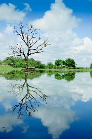 Beautiful wetland view, reflection with tree photo
