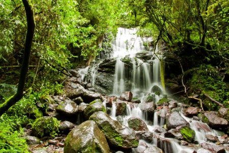 climate morning: tropical rain forest with waterfall