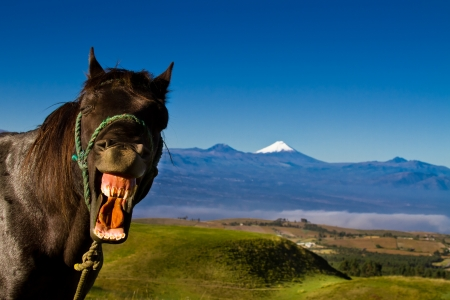 funny horse with a silly expression on it s face photo