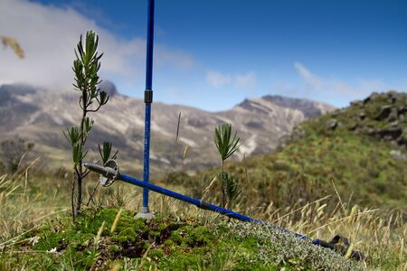 walking poles in summer nature  photo