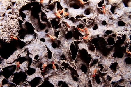 Closeup of texture, termite colony