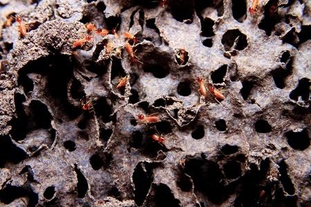 Closeup of texture, termite colony