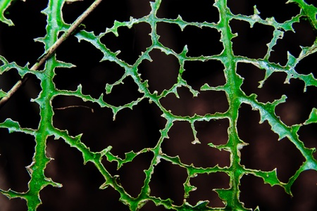 drilled green list   Leaf with holes  Stock Photo - 16121569