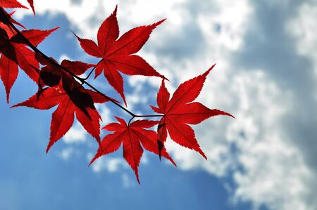 Autumn leaves with the blue sky background Stock Photo - 18343393