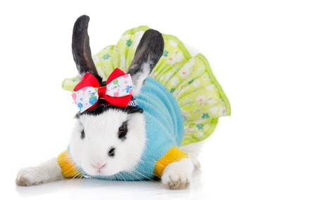 funny rabbit with green dress and bow photo