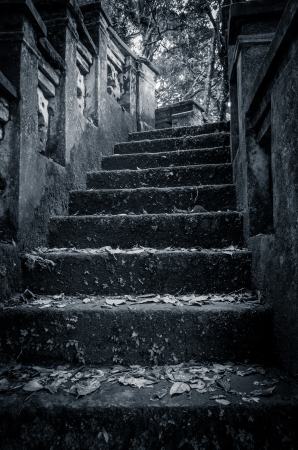 scary stone stairs in the forrest Stock Photo - 19570111