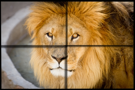 kruger: Lion close up with cross cuadrants for ad