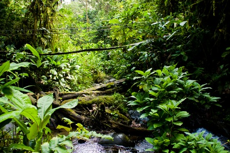 Rainforest in the amazon jungle with a stream and a bridge photo