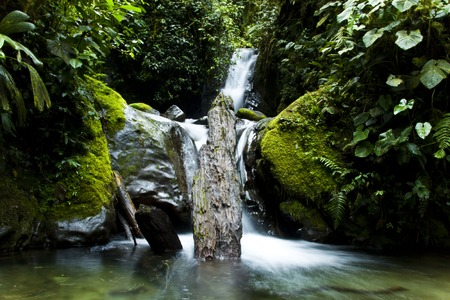 frog egg: forest waterfall in south america with log