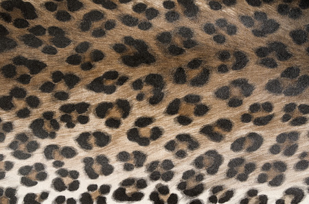 animal skin, pattern
