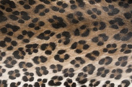 dierlijke huid, patroon