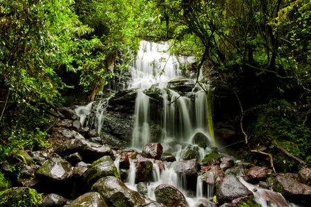 waterfall in the forest surrounded by trees photo