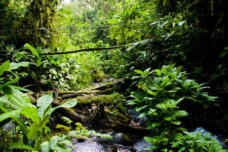 forest conservation: Rainforest in the amazon jungle with a stream and a bridge Stock Photo