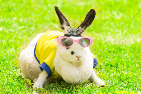 rabbit in Sunglasses in the park photo