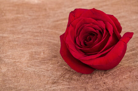 red rose wth copyspace for sign photo