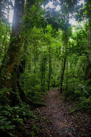 subtropical: Subtropical forest