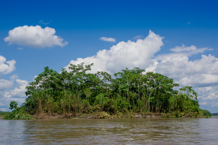 Tropical Rainforest  at Amazonas, South America photo
