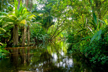 tropical forest: Amazon Jungle