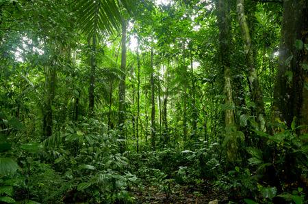Tropisch regenwoud landschap, Amazon Stockfoto