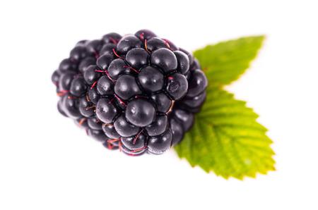 blackberries  on a white background photo
