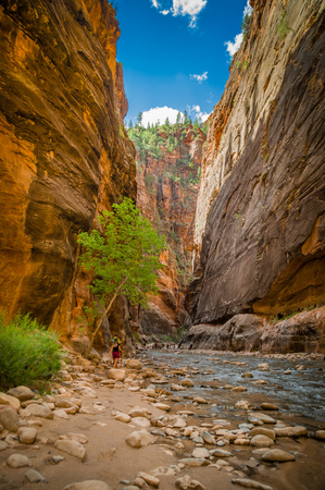 colorful breathtaking virgin river narrows in zion national park utah photo