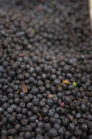 Pile of blueberries mortinos from ecuador selective focus photo